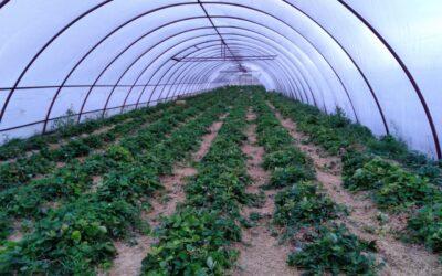 Уральские ученые посетили садоводческое хозяйство в Оренбургской области